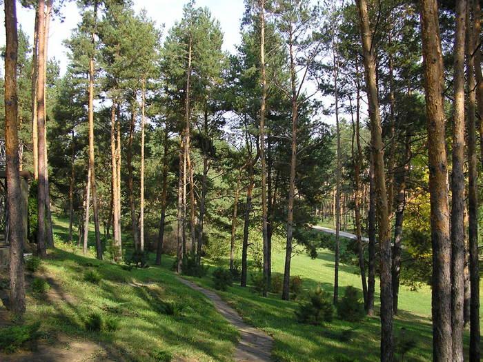 Современный ландшафтный дизайн загородного дома: зелень, воздух и вода
